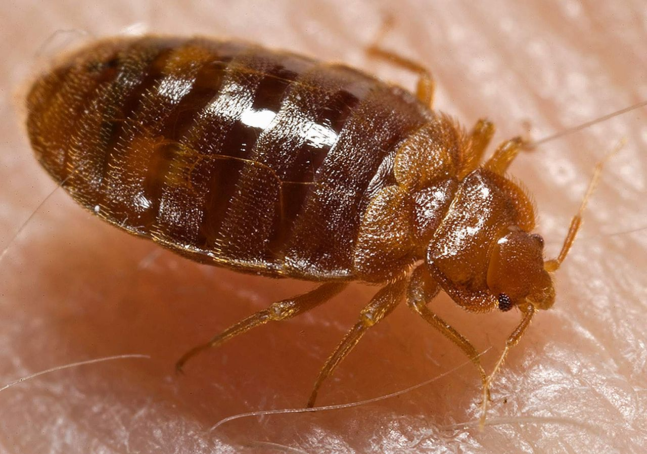 New Fibertrap Technology Stops Bedbugs, Termites, In Their Tracks