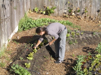 Organic Urban Vegetable Gardening For Dummies