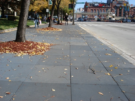 Innovative Rubber Sidewalk Saves Trees And More