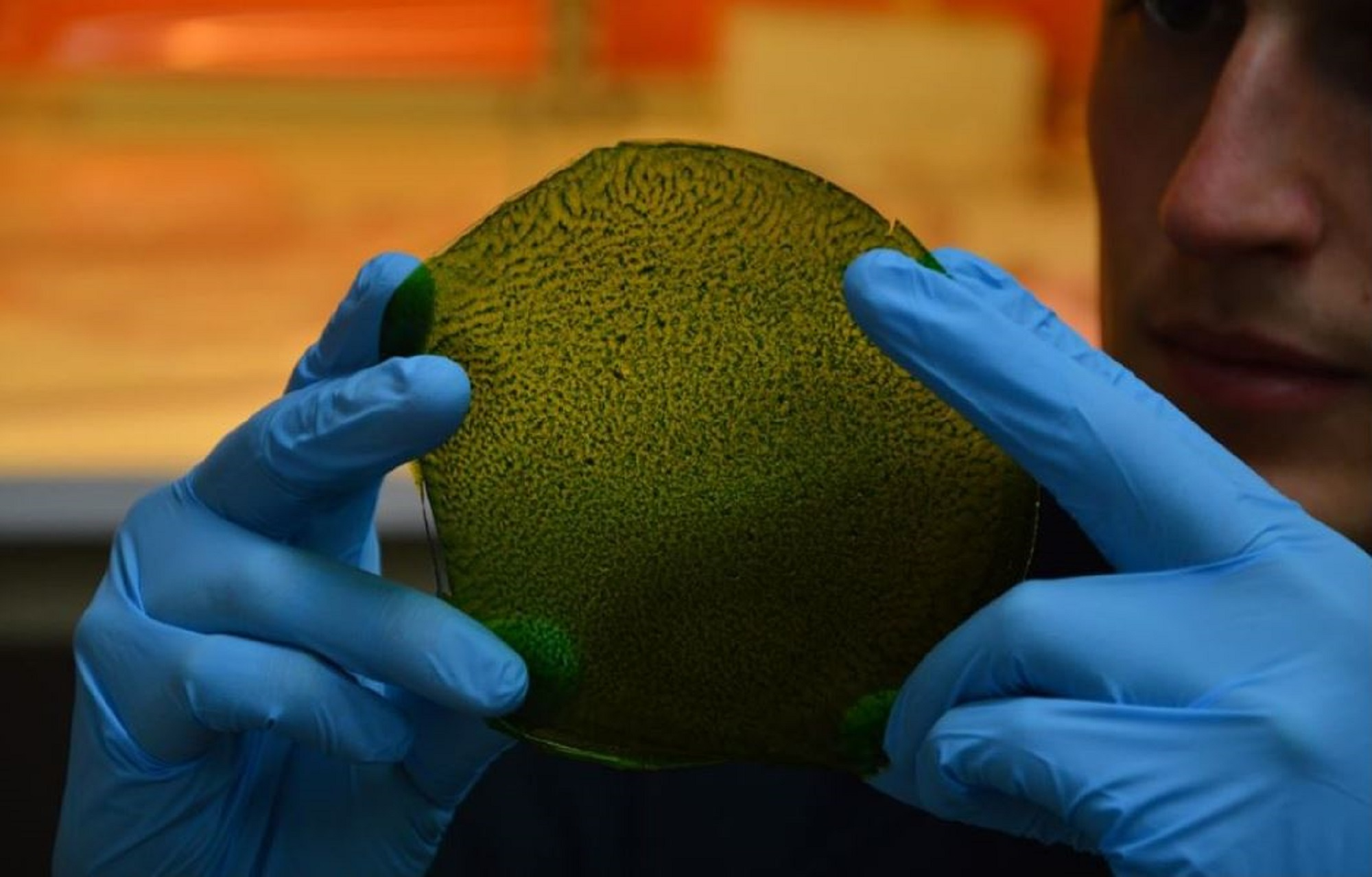 A Big, Big 'Leaf' for Mankind: Synthetic Leaf Produces Oxygen