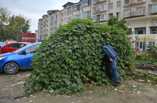 "Bizarre Chinese Ivy-Covered ""Zombie Car"" Needs Water, Fertilizer, Brains"