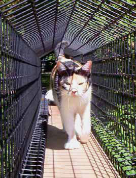 Outdoor Cat Enclosures How To Go From Patio To Catio