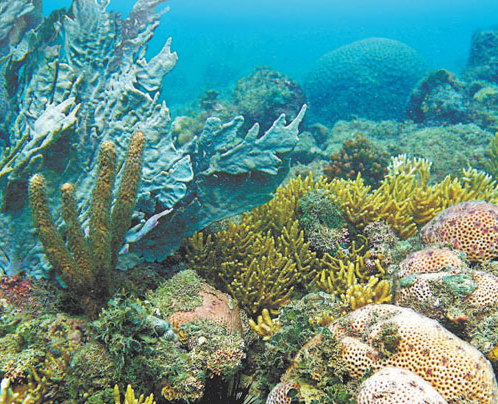 Coral Species From Brazil Useful To Fight Hospital Superbacteria