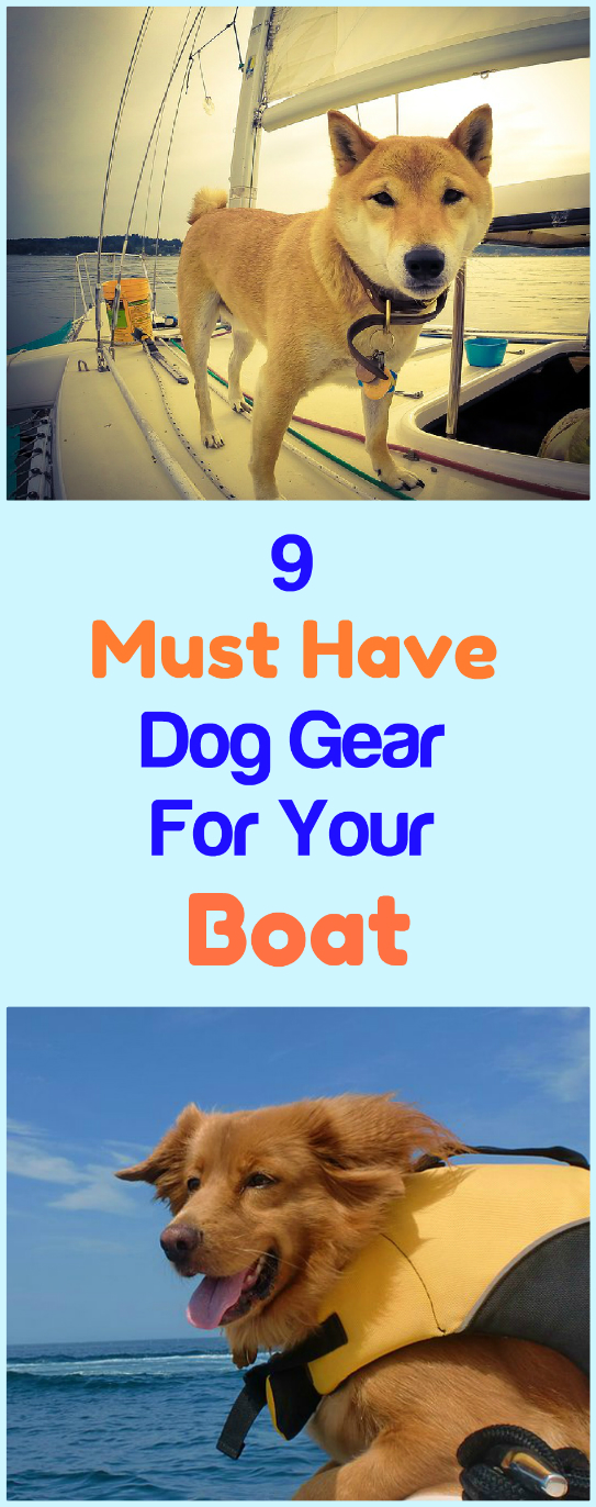 Dogs Gone Boating 9 Must Have Dog Items To Take On A Boat