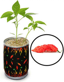 DIY Pepper - time to make the cubicle hot.