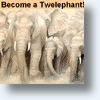 Twitter&#039;s 100,000 Twelephants Can Aid 100,000 Elephants