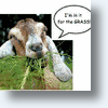 Google Goats Its PR Mowers Back Into Action For Earth Day