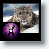 Apple's Snow Leopard Leaping Forward At Lighting Speed