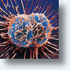 Russian Scientists Create New Model of Tumor