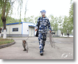Chinese Air Force Trains Monkeys To Seek & Destroy Bird Nests