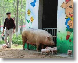 'Happy Farm' Online Game Inspires Eco-friendly Pig Cottages