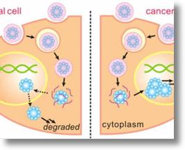 UCLA-developed degradable capsules deliver cancer treatment
