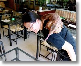 Reptile Cafe: Something Newt in Yokohama!