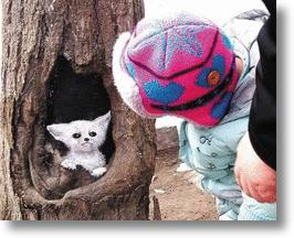 Tree Hole Paintings Add Life To China's Concrete Jungle