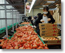 Fukushima Farmers' Online Sales Booming Thanks to Public Support