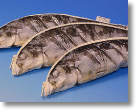 Grilled Fish Pencil Case is Quite a Catch
