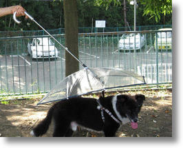Pet Umbrella Keeps Your Canine Companion Covered