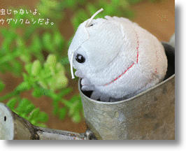Magnetic Giant Isopod Plush Is A Pill Bug For What Ails You