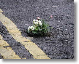 his first pothole garden