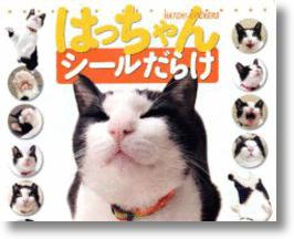 Meet Hatch-chan, Japan's First Blogging Cat