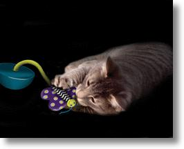 Moth Glow In The Dark Nighttime Cat Toy