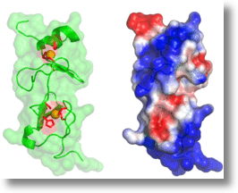 Molecular structure of LIMD2 protein