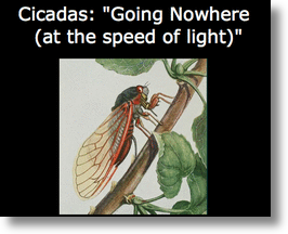 Cicadas, Going Nowhere At The Speed of Light