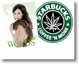 Weed As A Brand: Starbucks or Botwin Pot Stores? Fact Or Fiction?