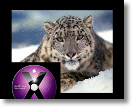 Apple's Snow Leopard Launch in September