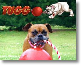 Tuggo (tug-o-war) dog toy