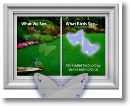 Window Alert decals can help reduce birds crashing into windows