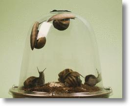 Grow Your Own Escargot