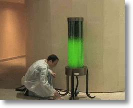 Algae Lamp