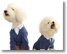 Dog cardigan sweaters