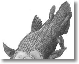 "Darwin Evolution Exhibition Features Preserved ""Living Fossil"" Coelacanth"