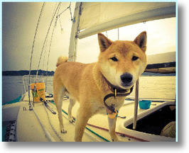 9 Must Have Dog Items To Take On A Boat