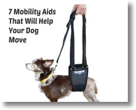 Dog Wheelchairs and Mobility Aids