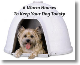 6 Warm Houses To Keep Your Dog Toasty This Winter