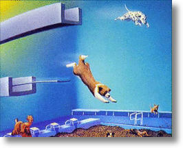 Dog Heaven from OutOfTheEarth.com