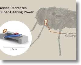Super-hearing fly inspires new hearing aid