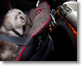 PupSaver Car Safety Seat