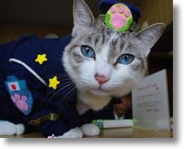 Japan's First Police Cat Rats Out Criminals