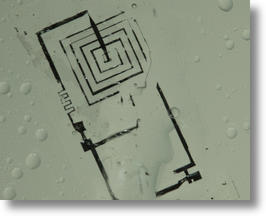 Silk-silicon implant dissolves as programmed
