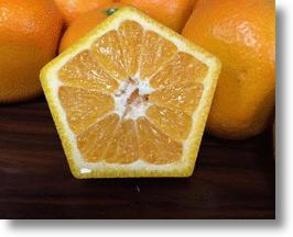 Japanese Five-Sided Oranges Look Weird, Taste Great, Won't Roll Off The Table