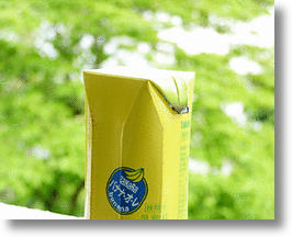 Designer Fruit Juice Boxes by Naoto Fukasawa Sport Fresh Look and Real A Peel