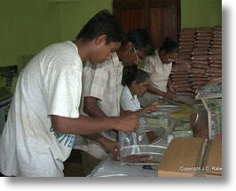 Manually sorting red rice