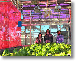 Soliculture Solar Greenhouse Panels (image courtesy of Soliculture)