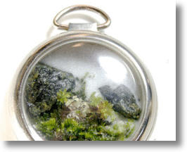 Terrarium in an old pocket watch