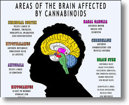 How Cannabinoids Affect The Brain
