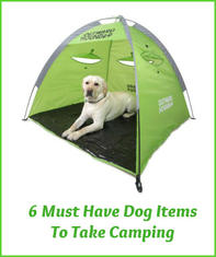 6 Must Have Dog Items To Take Camping